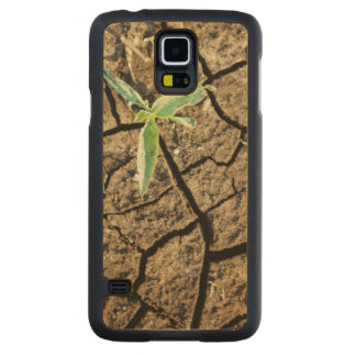 Seedling In Cracked Earth Maple Galaxy S5 Slim Case