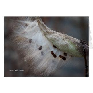 Seeds 4 tomorrow greeting card