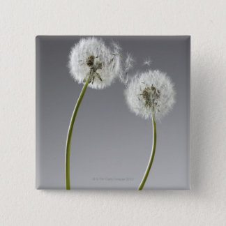 Seeds connecting two dandelions 15 cm square badge