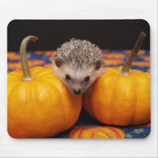 Seeking the Great Pumpkin Mouse Pad