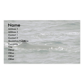 Sei whale business cards