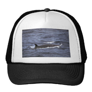 Sei whale mesh hat