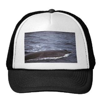 Sei whale mesh hats