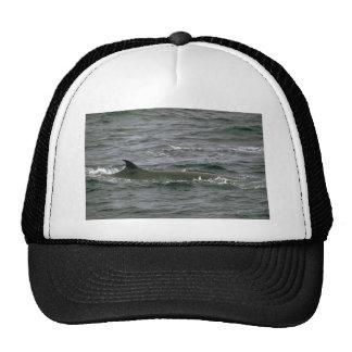 Sei whale trucker hats