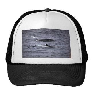 Sei whale hat