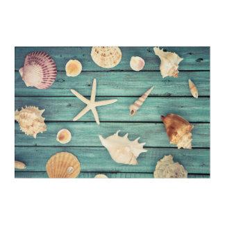 Selection Of Seashells Acrylic Wall Art