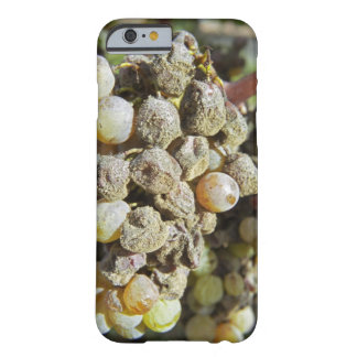 Semillon grapes with noble rot. at harvest time barely there iPhone 6 case