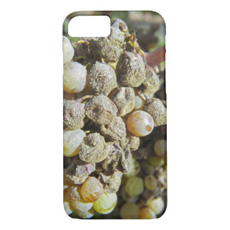 Semillon grapes with noble rot. at harvest time iPhone 8/7 case