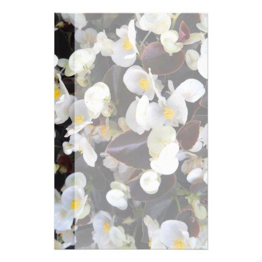 Semperflorens begonia full color flyer