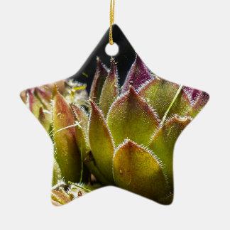 Sempervivum Plant Ornaments