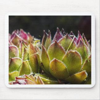 Sempervivum Plant Mouse Pad