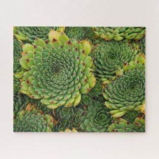 Sempervivum Succulent Jigsaw Puzzle