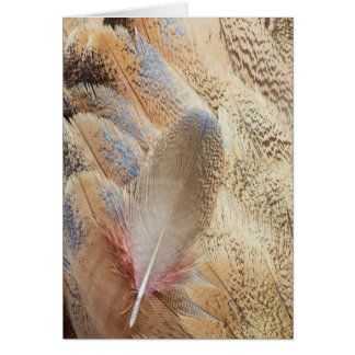 Senegal Bustard Feather Still Life Card
