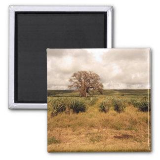 Senegal Landscape Refrigerator Magnets