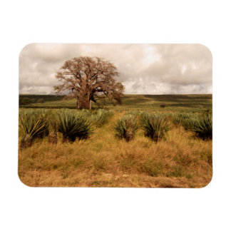 Senegal Landscape Rectangle Magnet