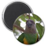 Senegal Parrot 6 Cm Round Magnet