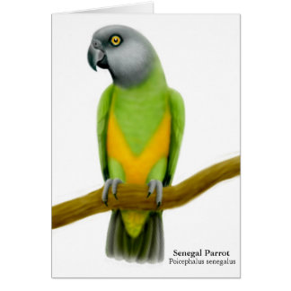 Senegal Parrot Greeting Card