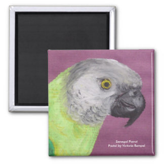 Senegal Parrot Pastel Square Magnet