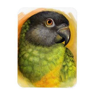Senegal parrot realistic painting magnet