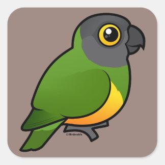 Senegal Parrot Square Sticker
