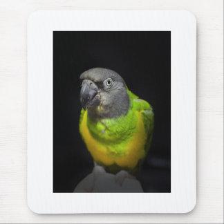 Senegal Parrot staring Teecoo Mouse Mat