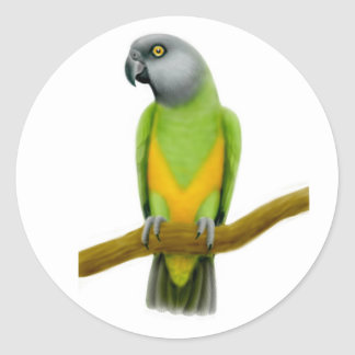 Senegal Parrot Sticker