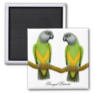 Senegal Parrots Magnet
