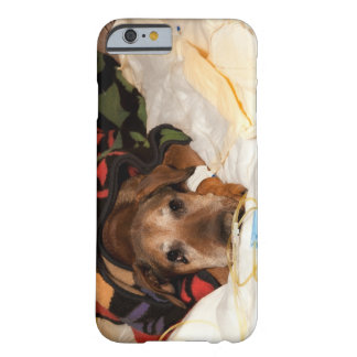 senior dog in the intensive care unit with a barely there iPhone 6 case