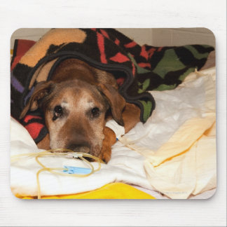 senior dog in the intensive care unit with a mouse pad