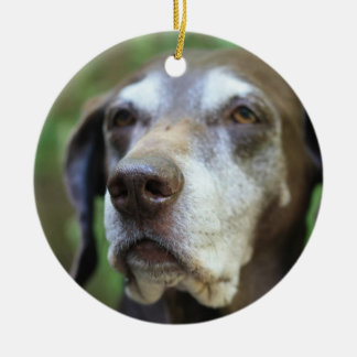 Senior German Pointer ornament