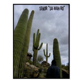 "Señor ""SA-WAH-RO"" Postcard"