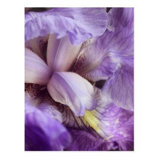 Sensual Flower Postcard