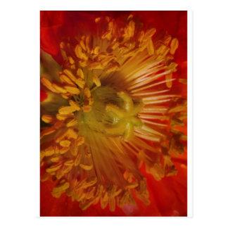 Sensual Heart of Flower Pollen Laden Greetings Post Card