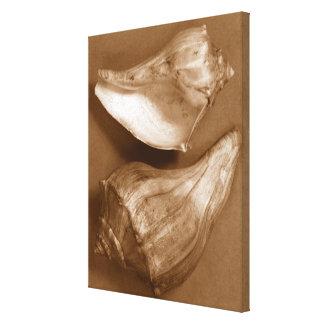 Sensual Shells Canvas Print