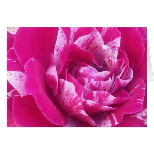 Sentimental rose greeting card