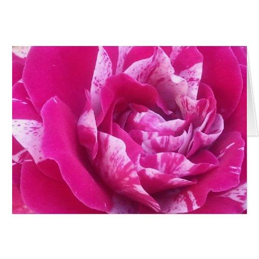 Sentimental rose greeting cards