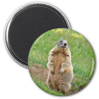 Sentinel marmot 6 cm round magnet