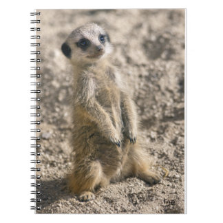 Sentrt-in-Training Notebook