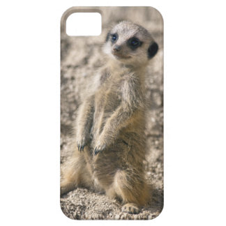 Sentry-in-Training iPhone 5 Case-Mate Case