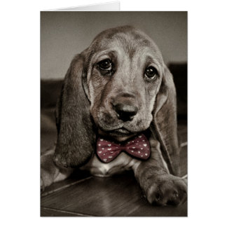 Sepia Basset Hound Pawsitively Amazing Birthday Card