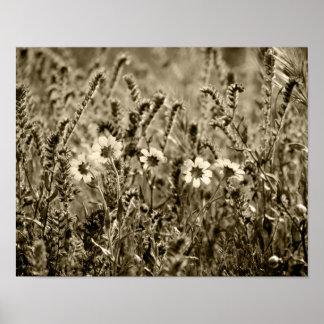 Sepia Botany Poster