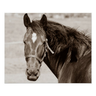 Sepia Brown Horse Poster