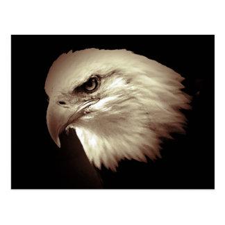 Sepia Color Bald Eagle Post Card