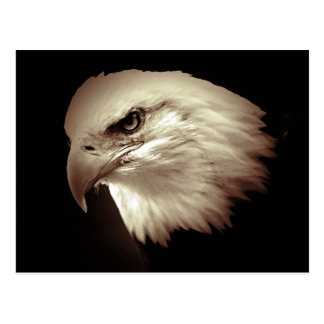 Sepia Color Bald Eagle Postcard