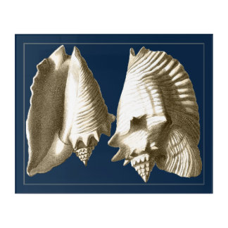 Sepia Conch Seashells Acrylic Wall Art