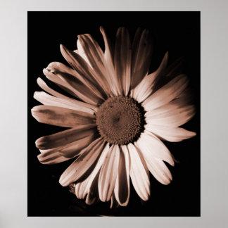 Sepia Daisy.. Poster