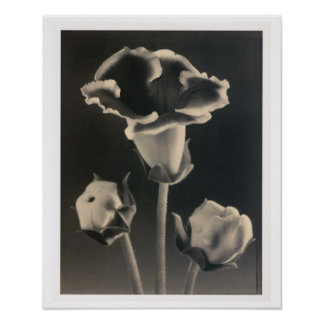 Sepia Flowers Botanical Print