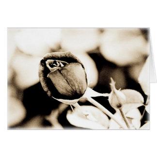 Sepia Rose Greeting Card