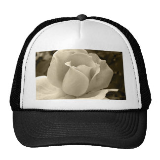Sepia Rose Hats
