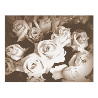 Sepia Roses Postcards